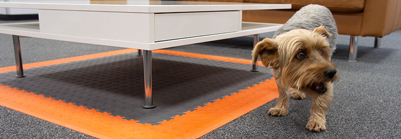 Office dog on Grey, Orange Cointop and Diamond Plate Office Floor Tiles